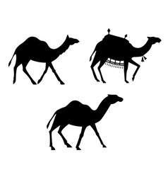 Silhouettes of camels vector
