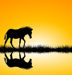Zebra silhouette on sunset vector