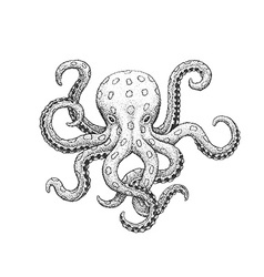 Octopus engraving vector