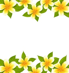 Decoration frame made in frangipani plumeria vector
