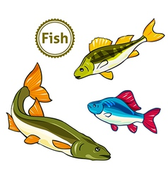 Fishes perch salmon vector