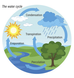Water cycle colour vector