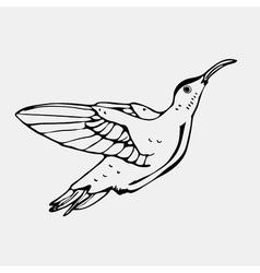 Hand-drawn pencil graphics colibri bird Engraving vector image vector image