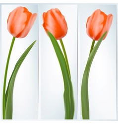 Set of banners with colorful flower EPS 10 vector image vector image