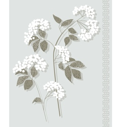 White botanical vector