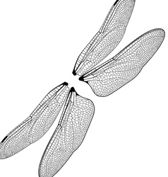 dragonfly wings vector image vector image