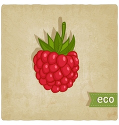 Raspberries eco background vector