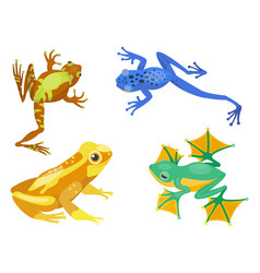 frog cartoon tropical animal cartoon nature icon vector image