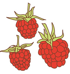 Ripe raspberry isolated on white background sketch vector
