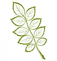 Leaf of dog rose vector vector