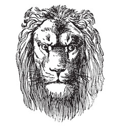 Lion head is a prospectus of dr schuberts vector