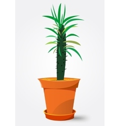 Pachypodium cactus in pot vector