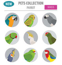 parrot breeds icon set flat style isolated on vector image