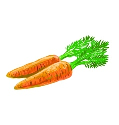 picture of carrot vector image vector image