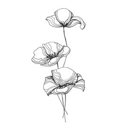Poppies flowers line art vector