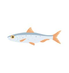 sardina fish isolated  cartoon vector image
