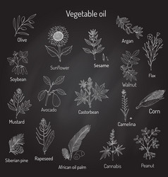Collection of different oil plants vector