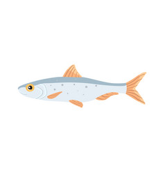 sardina fish isolated cartoon vector image