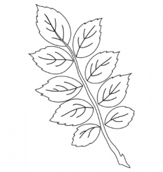 leaf of dog rose contour vector image vector image