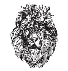 Lion head is a painting by paul meyerheim vintage vector