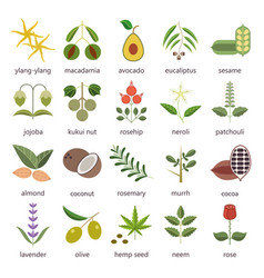Set of herbs and plants color flat icons used in vector