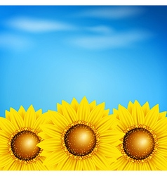 Decorative summer background with sunflowers vector image