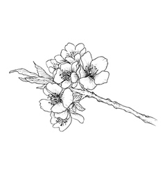 Hand drawn branch of cherry blossom vector
