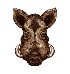 boar pig or hog wild animal isolated sketch vector image