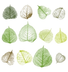 Leafs isolated vector