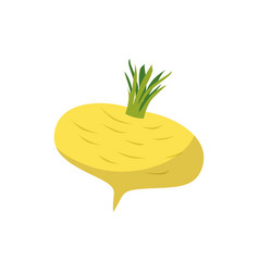Turnip isolated yellow vegetables on white vector
