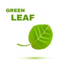 Green leaf isolated on white background vector