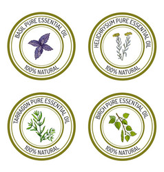Set of essential oil labels basil tarragon birch vector