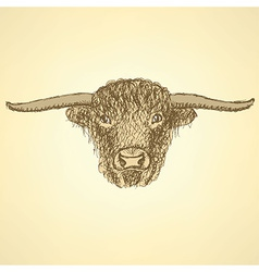 Sketch bull head in vintage style vector image vector image