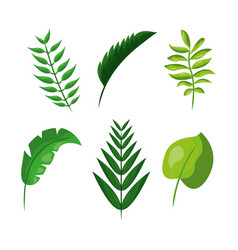 Tropical leaves foliage frond plant botanical vector