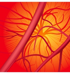 blood system vector image vector image