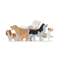 Collection of different dogs isolated on white vector
