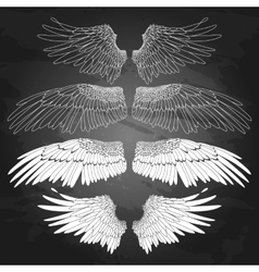 Graphic wings collection vector image vector image