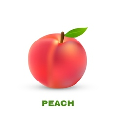 Peach isolated on white background vector