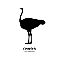 black silhouette of ostrich vector image vector image