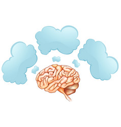 Human brain and three speech bubbles vector
