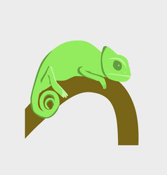 In flat style of chameleon vector
