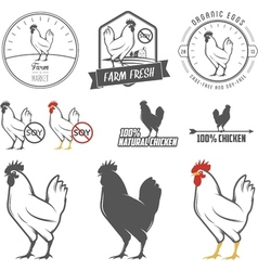 Set of vintage chicken meat labels and stamps vector
