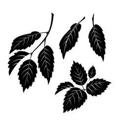 Elm leaves pictogram set vector