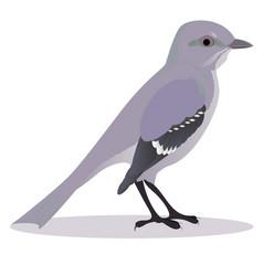 mockingbird vector image
