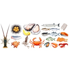 Set of different kinds of seafood vector image vector image