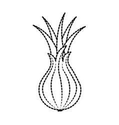 vegetable onion harvest nutrition ingredient vector image