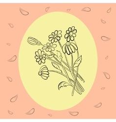 Hand drawn delicate chamomile vector