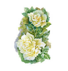 hand drawn white roses isolated on white vector image