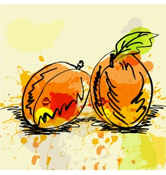 stylized apricot vector image