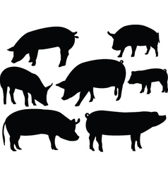 Pig collection vector